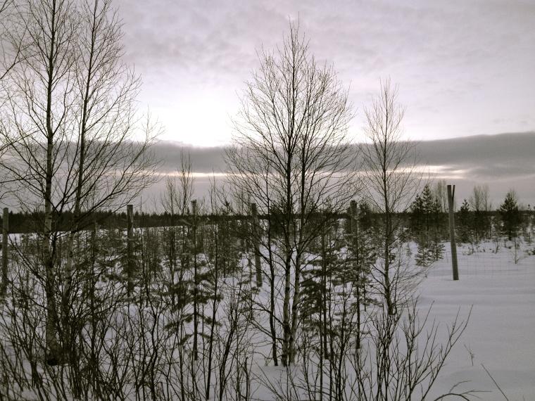 Rovaniemi, escursione motoslitta, globazinetouch